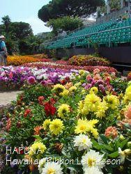 ステージ前の花